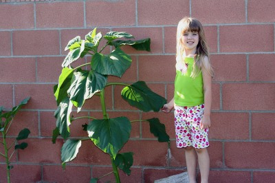 Amara and her Sunflower