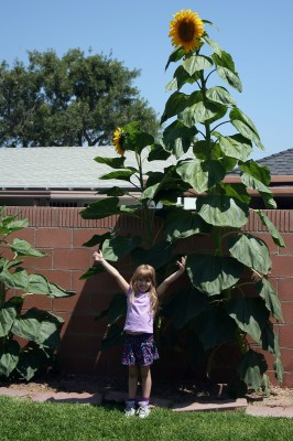 Amara and the Giant Sunflowers