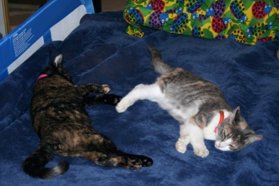 Twiggy and Twursula: Sleepy Kittens