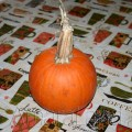 Pumpkin on the table