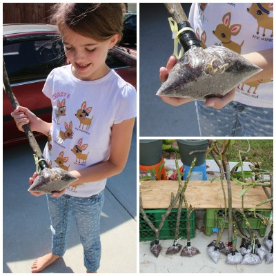 Collage of Amara and our bag rooted plumerias.